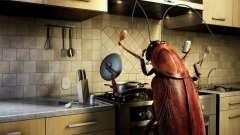 К чему появляются тараканы в квартире? Примета не согласна с правилами санитарии