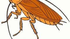 К чему привиделись тараканы во сне: сонник подскажет