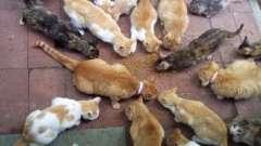 К чему снится много кошек? Что говорит об этом сонник?