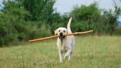 Как дрессировать щенка?