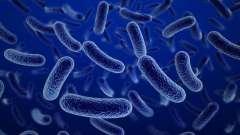 Как дышат бактерии? Аэробы и анаэробы. Особенности дыхания прокариот