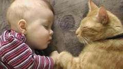 Как глисты у кошек передаются людям? Профилактика заражения и лечение глистов у кошек