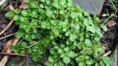 Как избавиться от мокреца в огороде: советы садоводам