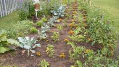 Как избавиться от сорняка в огороде? Подумаем вместе
