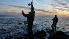 Как ловить окуня на спиннинг?