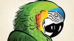 Как нарисовать попугая карандашом поэтапно? Узнаем!