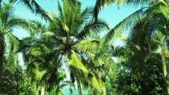 Как называется азиатская пальма с перистыми листьями? Тропическая пальма с перистыми листьями: название и описание