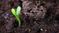 Как образовалась почва? Образование почвы: условия, факторы и процесс