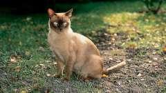 Как отвадить кошек от участка? Как отвадить кошек гадить на участке?