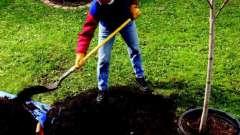 Как посадить дерево? Поговорим об этом