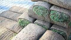 Как посадить газонную траву на даче: подготовка, выбор культуры, посадка