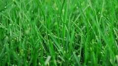 Как посеять газонную траву самостоятельно?