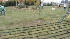 Как правильно посеять газонную траву: подготовка, выбор культуры и создание лужайки