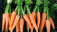 Как правильно садить морковь – полезные советы