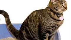 Как приучить кошку к лотку – важная задача первых дней жизни.