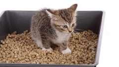 Как приучить котенока к туалету: советы будущим владельцем