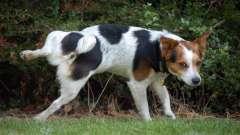 Как приучить собаку к туалету на улице: полезные рекомендации