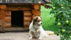 Как сделать будку для собаки своими руками: основные моменты