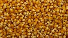 Как сделать попкорн из кукурузы дома? Как приготовить из кукурузы попкорн?
