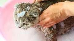 Как выбрать шампунь от блох для кошек, и как его использовать?