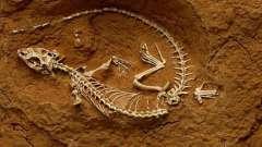 Какая наука изучает ископаемые остатки вымерших организмов? Подробный разбор