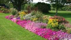 Какие цветы посадить на клумбе. Оформляем цветник