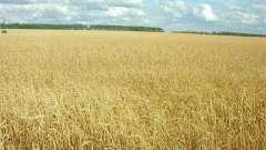 Какие изменения произошли в системе землевладения? Права и обязанности землевладельцев