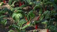 Какие овощи можно сажать в тени - секреты огородников