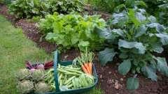 Какие овощи растут в тени деревьев и кустарников на дачном участке