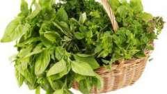 Какие травы собирают в мае: перечень растений и особенности их заготовки