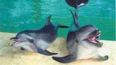 Какой сочинский дельфинарий самый лучший?