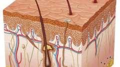 Какова роль кожи в терморегуляции:значение и особенности осуществления процесса