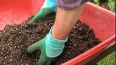 Какую роль играют удобрения для клубники осенью?