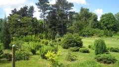 Калининград, ботанический сад: режим работы, фото, официальный сайт и как добраться