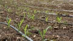 Капельный полив своими руками из подручных материалов. Как сделать капельный полив огорода на даче своими руками?