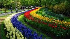 Кекенхоф (парк) – сотканный самой природой цветочный ковер