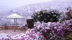 Кипр в январе. Стоит ли ехать отдыхать на остров зимой