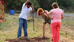 Когда сажать деревья осенью и как правильно это делать?