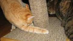 Когтеточки для кошек своими руками: легко ли их сделать