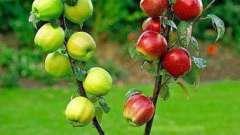 Колировка деревьев весной, осенью, летом (фото)