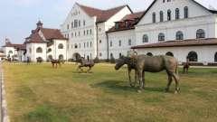 Конный парк «русь» - место возрождения традиций русского коневодства и развлечений для всей семьи