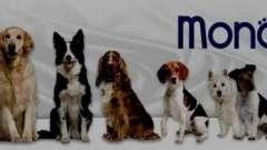 """Корм """"монже"""" для собак: описание, полезные свойства"""
