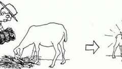 Кормление коз после окота. Уход за козой после окота