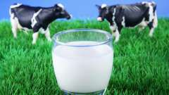 Коровье молоко: жирность, польза и вред