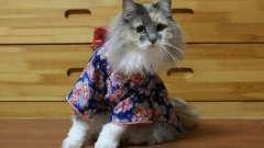 Кошки в кимоно завоевывают сердца японских пользователей интернета