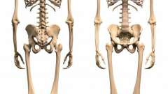 Кости нижней конечности человека. Суставы нижних конечностей человека