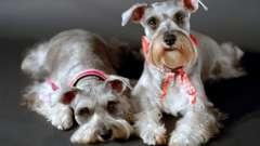 Красивые и умные собаки средних пород