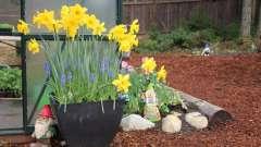 Креативные поделки своими руками для сада