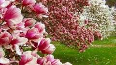 Куда поехать отдыхать в мае? Советы путешественникам