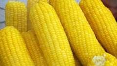 Кукуруза в пароварке: секреты приготовления